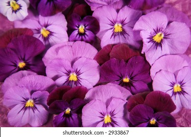 Pink pansy flowers images stock photos vectors shutterstock purple and pink pansy flower background mightylinksfo