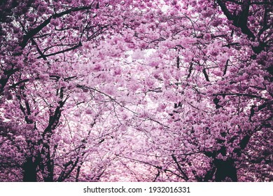 a purple and pink tree