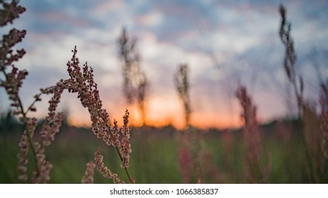 Purple plants in front of a sunset