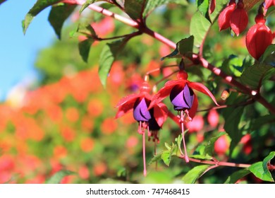 Purple and red flowers for  background