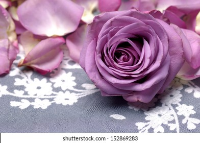 purple rose and petals on flower silk lace