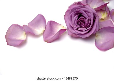 purple rose with petals plenty of space for text