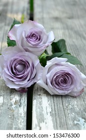 Purple Roses 3