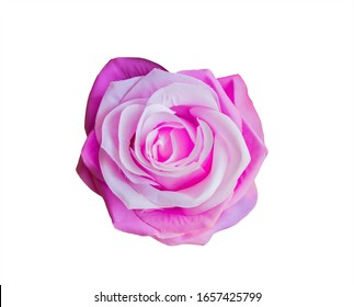 Purple roses on a white background