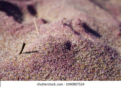 Purple Sand on the Beach in Salisbury, Massachusetts