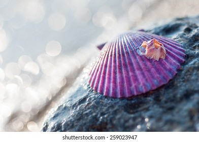 Purple sea shell on the beach