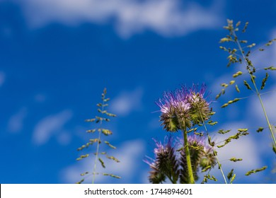 Purple small flowers. Picture from below. Plants against the sky. Single grass. Field flowers. Low vegetation.