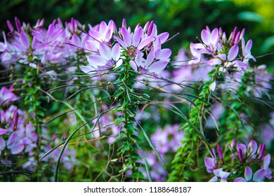 Purple Spiky Flower Images Stock Photos Vectors Shutterstock