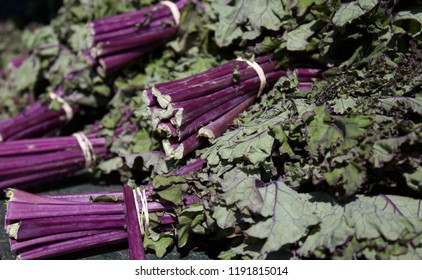 Purple Stems and leaves