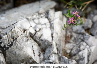 A purple summer wildflower marks a detail of the many limestone pinnacles dominating the scenery of Japan's largest karst landscape in Akiyoshidai Quasi-National Park in Yamaguchi, Japan