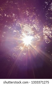 Purple Sunbeams Shine