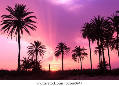 Purple sunset and palm trees in Spain