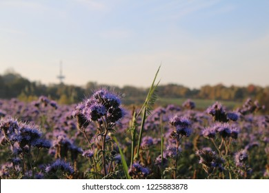 Cool Landscapes Photos 425 877 Cool Stock Image Results