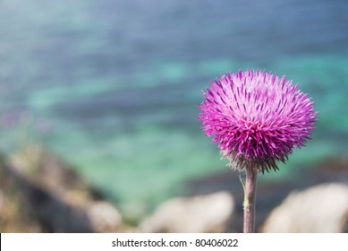 purple thistle in blossom with a crystal sea waters in a background. Western Crimea, Black sea in later spring