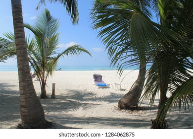 Purple towel on a blue and white beach lounge chair resting on white sand beach. There are also coconut palm trees with green leaves, a blue green ocean and a clear blue sunny summer sky day.