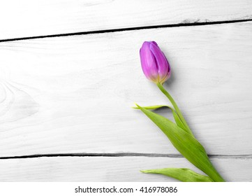 Purple tulip lying on white wooden surface as a colorful natural background.
