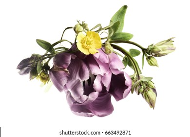 Purple tulip and wildflowers on a white background.