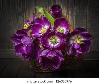 purple tulips in a basket - vintage style