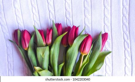 Purple tulips on white Jersey background
