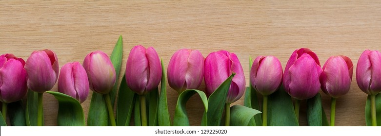 Purple Tulips panorama