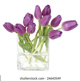 purple tulips in square glass vase isolated on white background