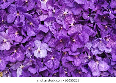 Purple Vanda Orchid Wall Decoration Interior