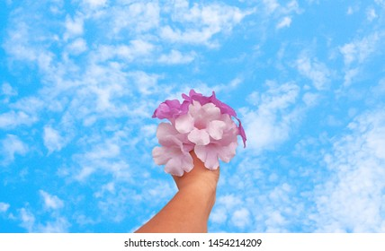 purple ,violet flower holding in hand with blue sky ,fresh and relax spring nature background