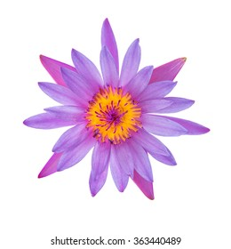 Purple water lily isolated on white background