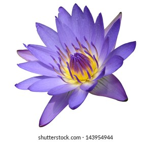 Purple waterlily on white background with clipping path