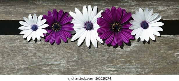 purple and white daisies on wood