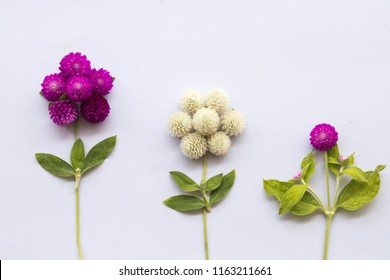 purple and white flower globe amaranth local floral arrangement on background white