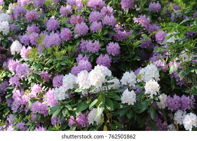 Purple and white flowers.