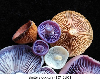 Purple, white and orange mushrooms on a dark background