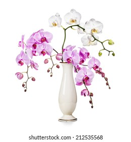 Purple and white orchid flowers in retro vase isolated on white background