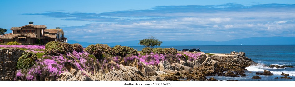 Purple wild flowers on Monterey beach in spring with blue sky, California, USA