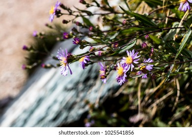 Purple Wildflowers Growing Beside a Waterfall
