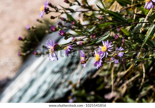 Purple Wildflowers Growing Beside a Waterfall