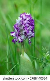 Purple wildflowers on blurred background