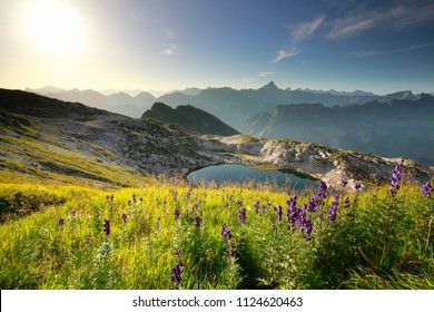 purple wildflowers over alpine lake in mountains