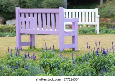 Purple wooden bench in a garden with grass lawn and lavender field.