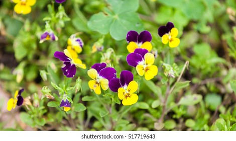 Purple and yellow flower images stock photos vectors shutterstock purple and yellow flowers mightylinksfo