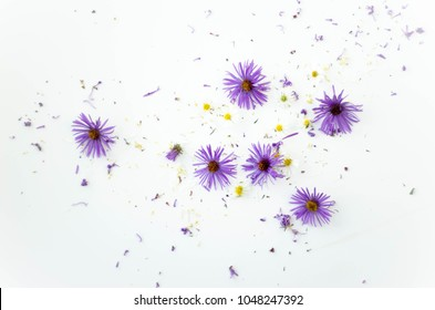 purple and yellow flowers on white background white space