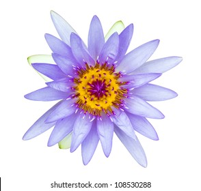 Purple with yellow pollen water lily isolated on white