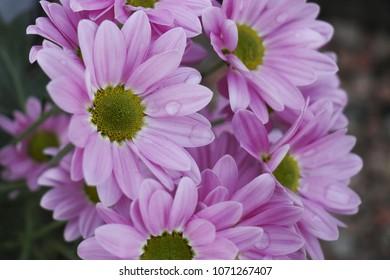 Purple/pink flower, close up