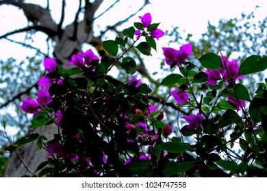 Purples flowers to sky