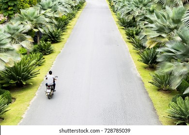 Purpose of life, Long journey alone, people is different, Direct route there are two natural trees, Motorcycle driver heading to