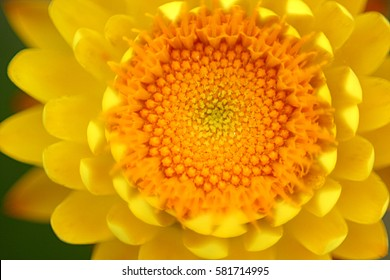 Purposely blurred close up flower for background