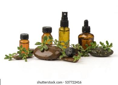Purslane, Common purslane, Common garden purslane, Pigweed purslane, Phak Bia Yai (Thai name) (Portulaca oleracea L.) extract liquid.