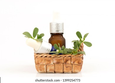 Purslane, Common purslane, green leaves and flowers on white background.(Extract)