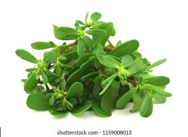 Purslane. Traditional European, French, Mexican, Asian and Turkish Salad Snack. Also Wild Portulaca Oleracea, Common Purslane, Verdolaga, Red Root, Pursley. Isolated on White Background.